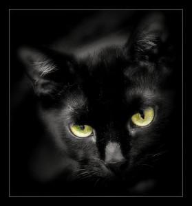 853-black-cat-1